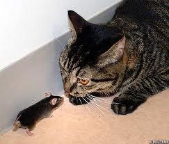 cat vs mouse